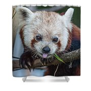 Mischievious Red Panda Shower Curtain