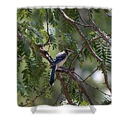 Mississippi Blue Jay Shower Curtain