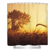 Mist In A Barley Field At Sunset Shower Curtain