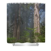 Mists Rising From Lady Bird Johnson Grove Shower Curtain