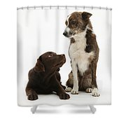 Mixed Breed And Chocolate Lab Shower Curtain
