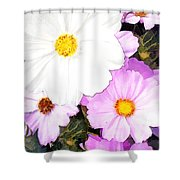 Mixed Pink And White Cosmos Shower Curtain