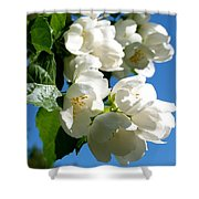 Mock Orange 4 Shower Curtain