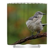Mocking Bird Perched In The Wind Shower Curtain