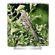 Mockingbird I Shower Curtain