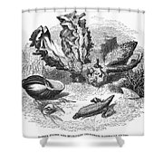 Mollusk Shower Curtain