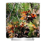 Monarch Butterfly Gathering Shower Curtain