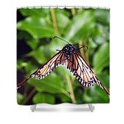 Monarch Butterfly In Flight Shower Curtain
