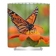 Monarch Butterfly Macro Shower Curtain