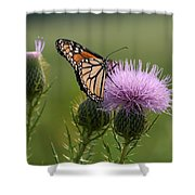 Monarch Butterfly On Bull Thistle Wildflowers Shower Curtain