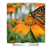 Monarch Butterfly On Tithonia Flower Shower Curtain