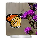 Monarch Shower Curtain by Mircea Costina Photography
