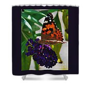 Monarch On A Black Knight Butterfly Flower Shower Curtain