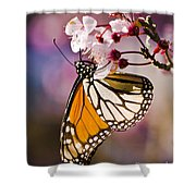 Monarch On A Flower Shower Curtain