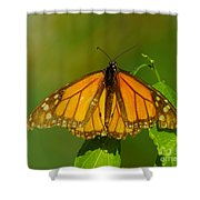 Monarch On Hackberry Shower Curtain