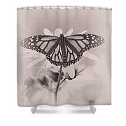 Monarch On Sunflower Shower Curtain