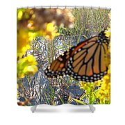 Monarch On The Dunes  Shower Curtain