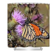 Monarch On Thistle II Shower Curtain