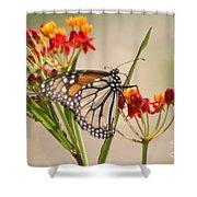 Monarch Portrait Shower Curtain