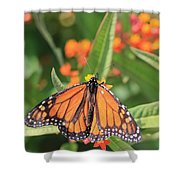 Monarch Sipping Shower Curtain