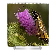 Monarch Thistle Munching Shower Curtain