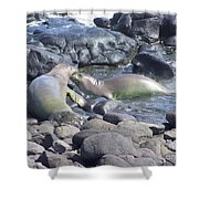 Monk Seals Shower Curtain
