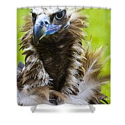 Monk Vulture 5 Shower Curtain
