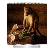 Monkey And Coconut Shower Curtain