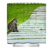 Monkey Mother With Baby Resting On A Walkway Shower Curtain