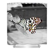 Monochromatic Butterfly Shower Curtain