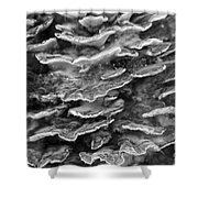 Monochrome Chicken Of The Woods Fungus Shower Curtain