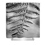 Monochrome Fern Frond Shower Curtain