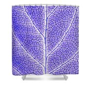 Monotone Close Up Of Leaf Shower Curtain by Sean White
