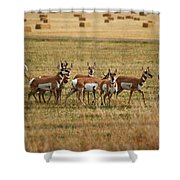 Montana Antalope 9396 Shower Curtain