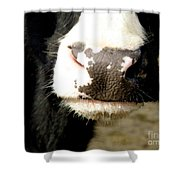 Moo Shower Curtain