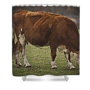 Moo Moo Cow Shower Curtain