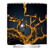 Moon Light And Tree Shower Curtain