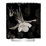 Moonlight Columbine Shower Curtain