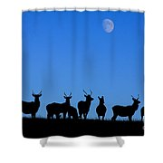 Moonlighting Shower Curtain