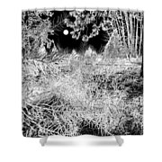 Moonlit Frost Shower Curtain
