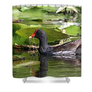 Moor Hen - Red Nose Shower Curtain