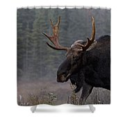 Moose, Algonquin Provincial Park Shower Curtain