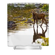 Moose Baby 2 Shower Curtain