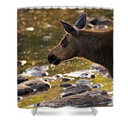 Moose Baby 3 Shower Curtain