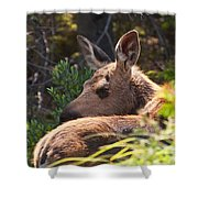 Moose Baby 5 Shower Curtain
