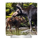 Moose Brunch Shower Curtain