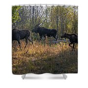 Moose Family Shower Curtain