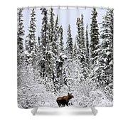 Moose In Deep Snow, Near Teslin, Yukon Shower Curtain