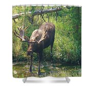 Moose Is Loose Shower Curtain