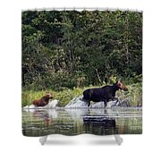 Moose N Baby..out Of Here Shower Curtain